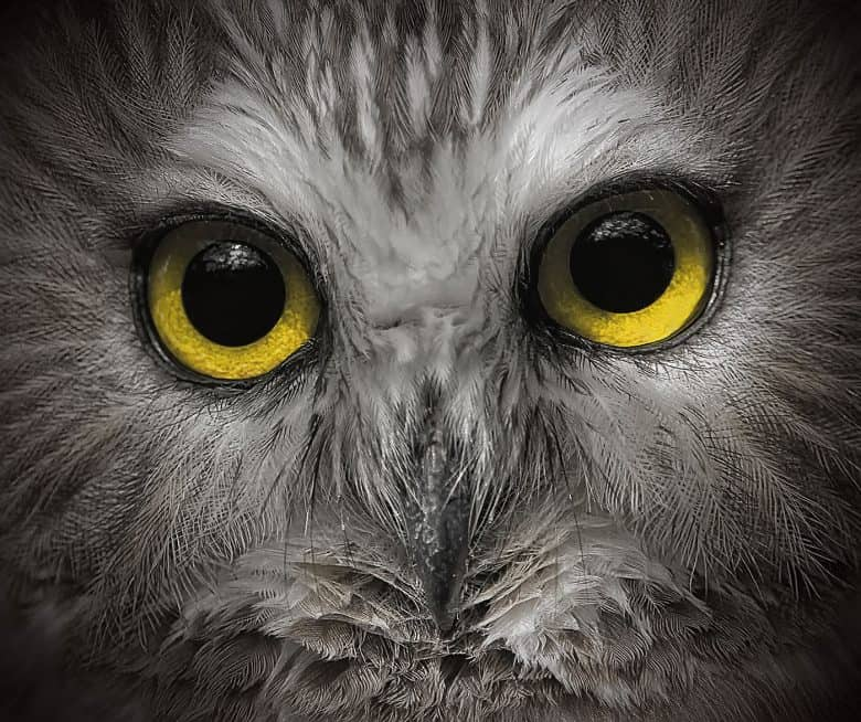 Large Owl Eyes