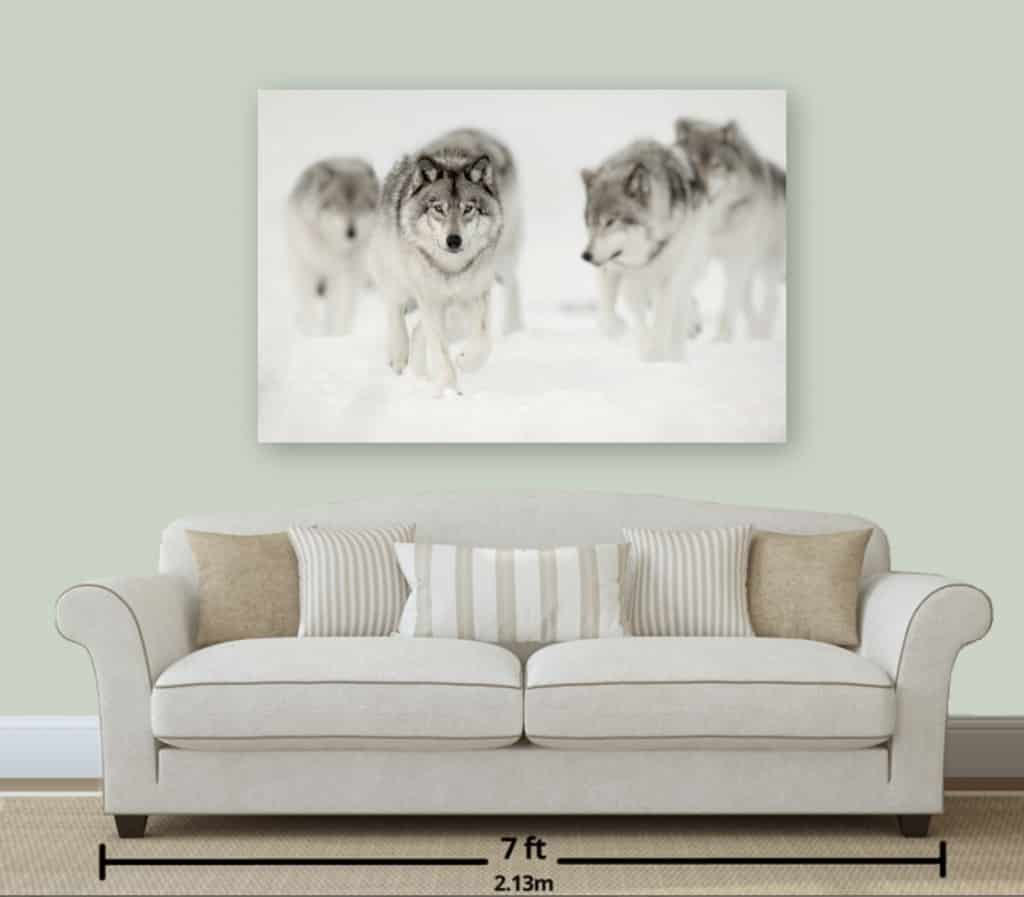 Wildlife Print of Timber Wolf Pack 36x54
