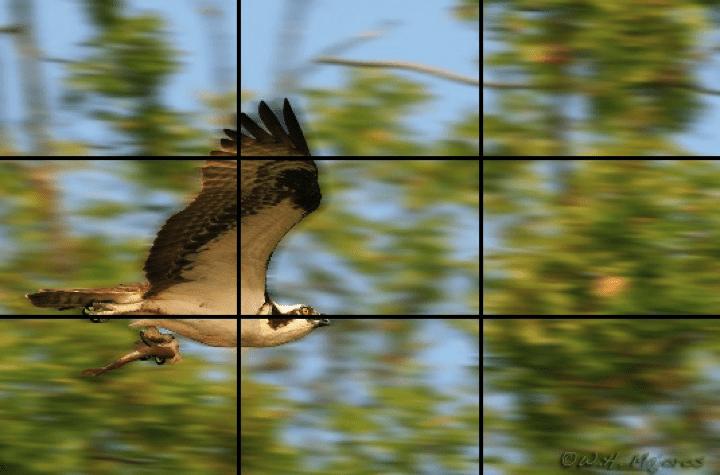 Rule of Thirds Bird