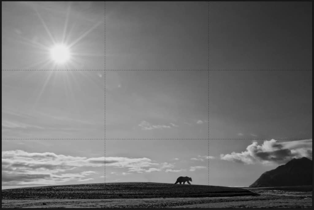 Rule of Thirds Grizzly Bear On Beach