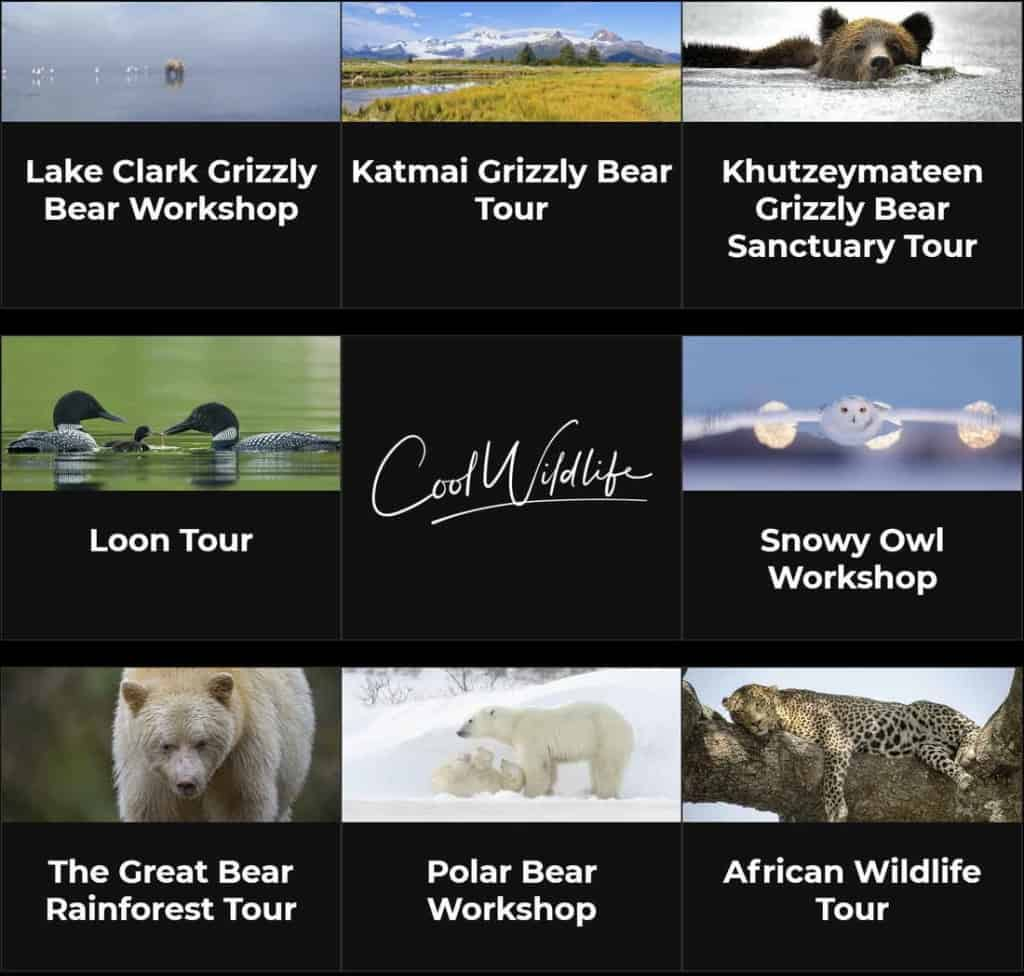 Wildlife Workshops and Tours