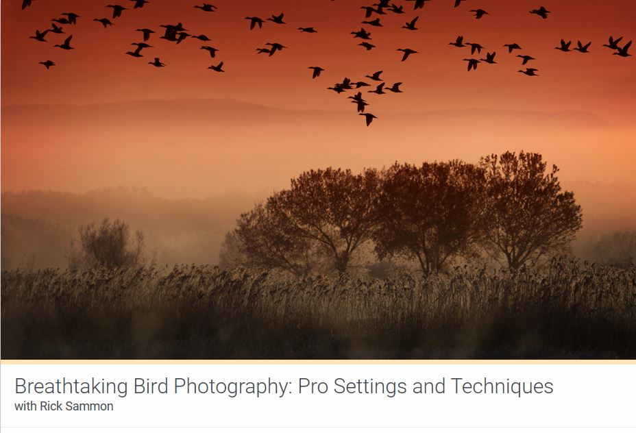 Kelbyone Breathtaking Bird Photography