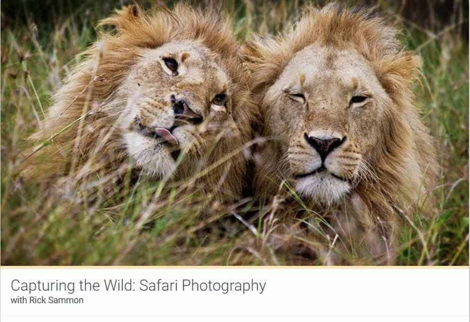 Kelbyone Capturing The Wild Safari