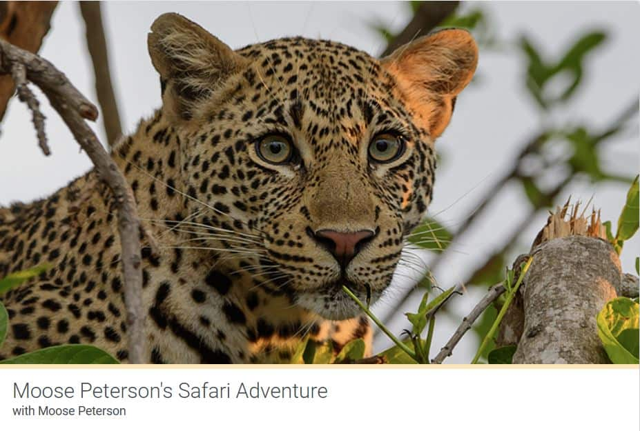 Kelbyone Safari Adventure