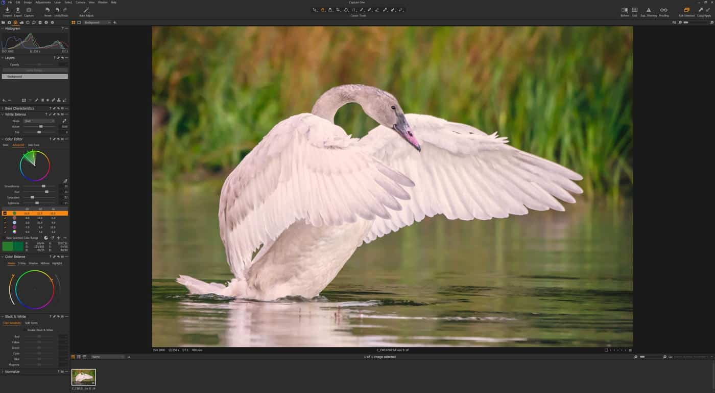 Capture One Advanced Colour Wheel on Swan