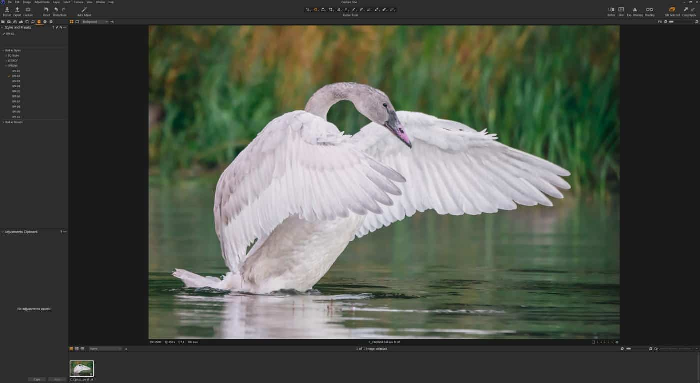 Capture One Swan Spring 02 Style