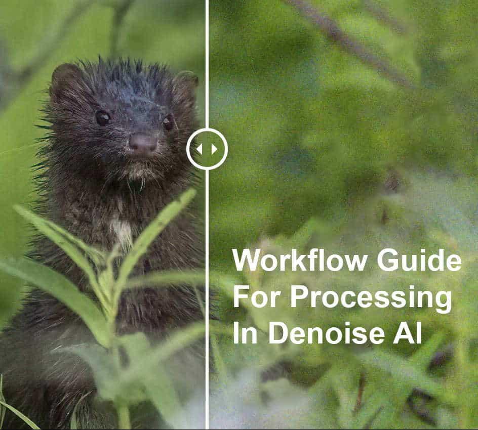 Topaz Denoise Workflow Feature